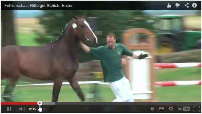 Fohlenschau 2011 – Video _ Rittergut Schick_2014-02-04_20-59-51